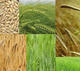 Препарати за растителна защита, биостимулатори, микро и макро торове